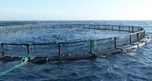 mostaganem-aquaculture