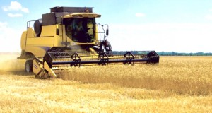 céréaliculture