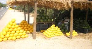 pasteque-melon-algerie