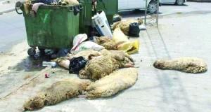 peaux de mouton jetées