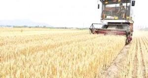 producteurs de céréales