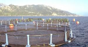 Aquaculture (1)