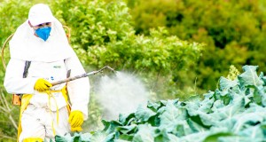 Chlef pesticides
