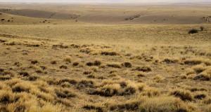 zones steppiques