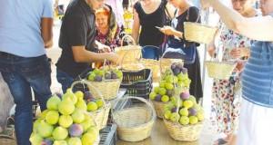 Culture de la figue