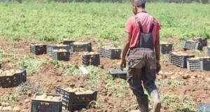 terre agricoles