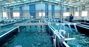 aquaculture (2)