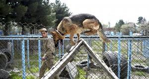 Le meilleur ami de l'homme est un chien renifleur d'explosifs