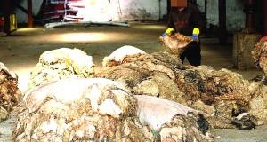 Peau de moutons