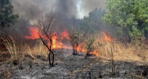 incendies des oliviers