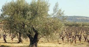 Plantation de plus de 5000 arbres fruitiers