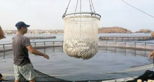 aquaculture médicale
