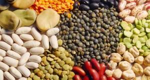 culture de céréales et de légumineuses