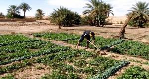 agriculture saharienne