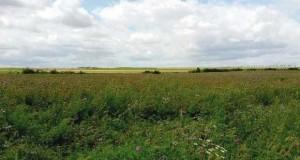 terres agricoles pour non exploitation