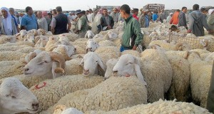 marchés bestiaux