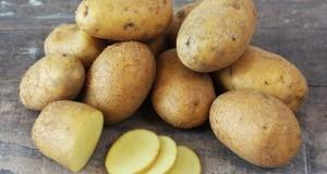 pomme de terre «bio»
