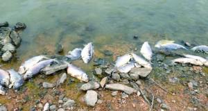 Lac oum ghellaz